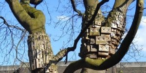 Picture of tree hotels